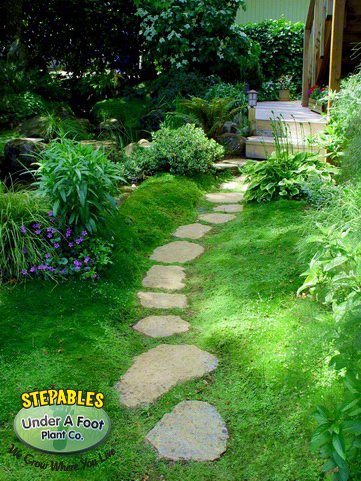 stepables  plants that tolerate foot traffic, Natural flower