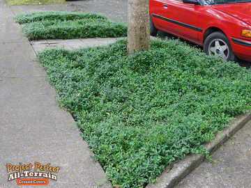 All Terrain Vinca minor Curbside2016402