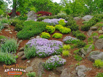 All Terrain Ground Covers Are Great On Large Scale Slopes Where Color And Contrast Needed To Bring About An Element Of Interest
