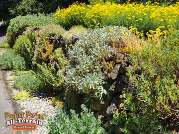 Assorted All-Terrain Ground cover rock wall201636012