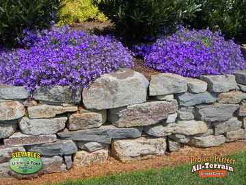 All Terrain Ground Covers Are Overhang Specialists Simply Plant Them Near The Edge Of Your Wall Sit Back And Watch Show