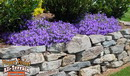 Campanula Drought-Wise Retaining Wall