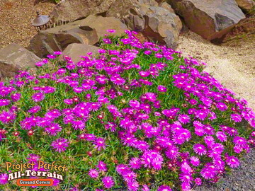 All Terrain Ground Covers Are Incredible On Rock Garden Floors Where Little To No Foot Traffic Is Required Note You Can Get Past The Issue By