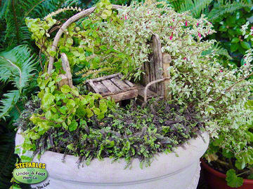 Fairy Garden Container with Leptinella Platts Black2016347