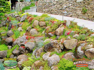 Rock Garden Walls And Slopes May Be In Full Sun Or Partial Shade Mindful Of Just How Much Light Your Area Has To Able Pick The Right Plant For