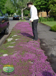 STEPABLES Red Creeping Thyme Lawn Substitution